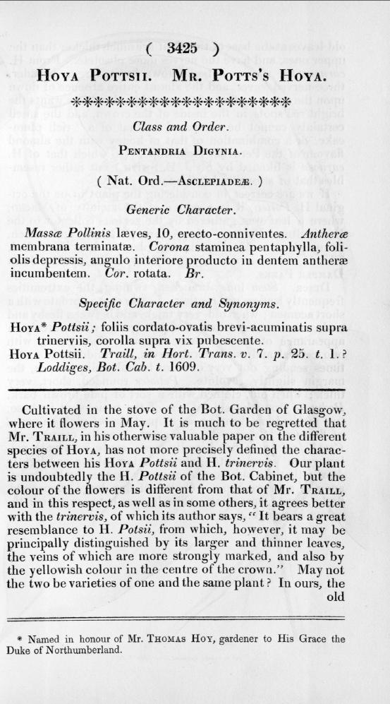 Curtis´s Botanical Magazine Tafel 3425 Pflanzenbeschreibung von Hoya pottsii