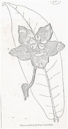 """Zeichnung aus """"The Garden"""" 20 (1883)"""